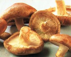 Čišćenje gljiva