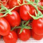 Zamrzavanje rajčica