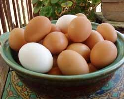 Pečena-jaja-u-bijelom-umaku