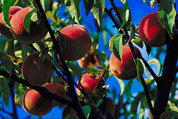 Sezonsko voće i povrće za srpanj